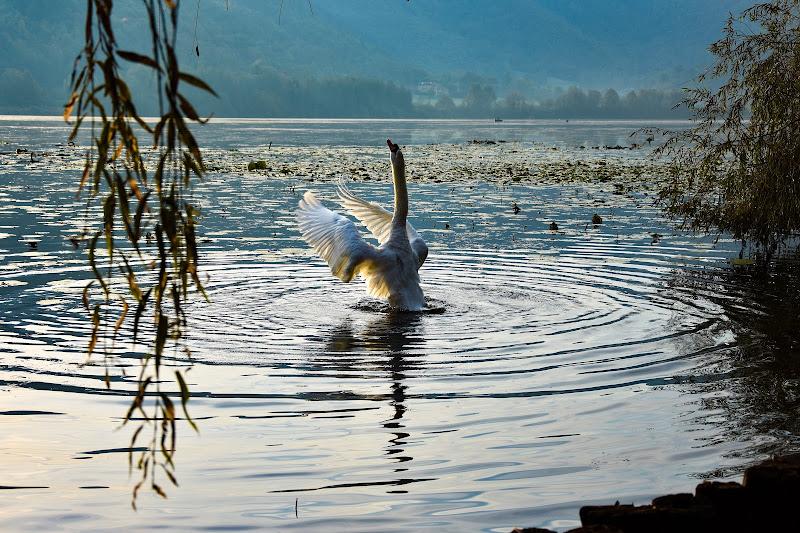 Il re del lago di DavideBoscarello