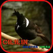 Cililin Master Juara Offline