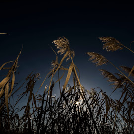 by Vladimir Jablanov - Nature Up Close Leaves & Grasses