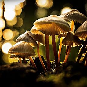 Watching a shower of stars. by Miguel Silva - Nature Up Close Mushrooms & Fungi ( moos, stars, miguel silva, forest, nature close up, viseu, portugal, fontelo, light, mushrooms,  )