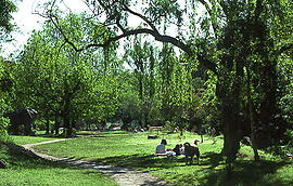Photo: Nearby Cooper Park - Take a picnic, walk the dog - 10 mins walk from Double Bay