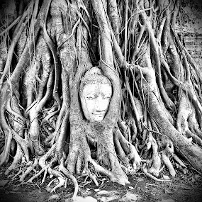 Buddha head by Reza Bang - Instagram & Mobile iPhone