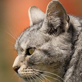 Wild  by Casey Bebernes - Animals - Cats Portraits