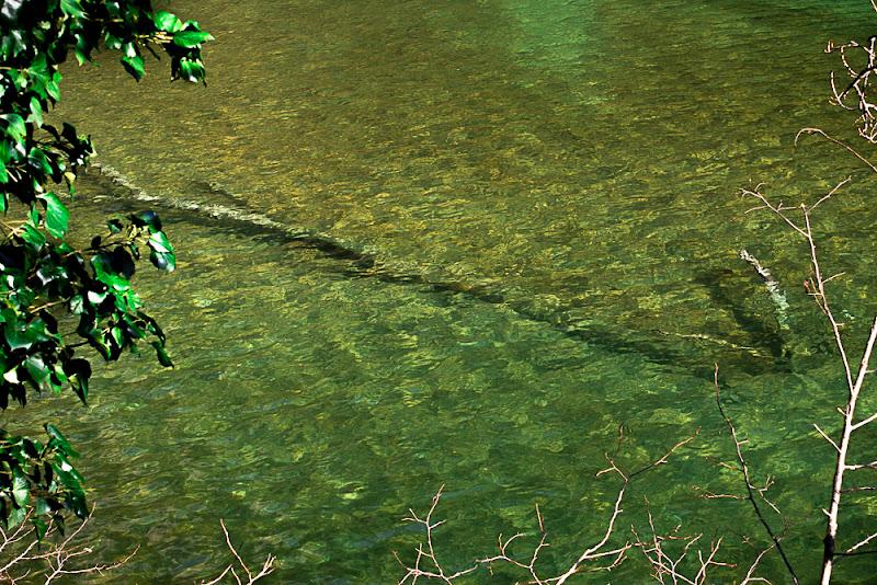 verde speranza di daniela_maranesi