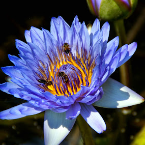 by Roxana McRoberts - Nature Up Close Flowers - 2011-2013 (  )