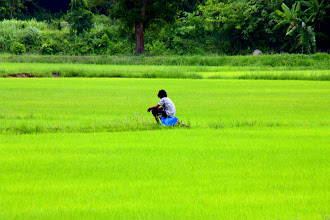 Photo: Day 324 -  In the Middle of a Rice Field