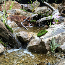 Photo: A unique Pondless Waterfeature incorporating driftwood installed in the Central Pennsylvania (PA) area in 2014. For more waterfeature photos, click the following link http://www.dreamscapeswatergardens.com/portfolio.html