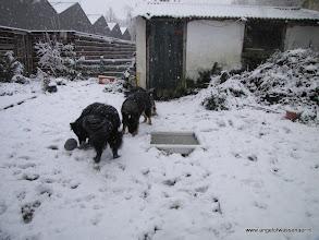 Photo: Sneeuw happen is ook lekker
