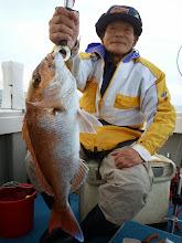"""Photo: いいサイズの真鯛キャッチは""""クマガイさん""""! よかったですねー!"""