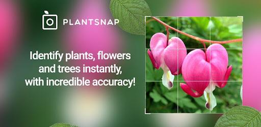 PlantSnap – identyfikowanie roślin, kwiatów, drzew