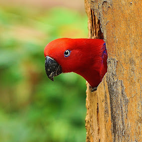 Home Alone by Chairil Anwar - Animals Birds