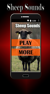 Sheep Sounds screenshot 0