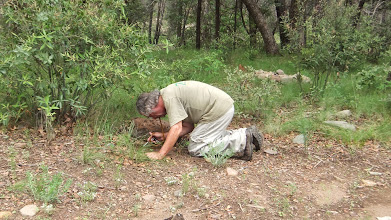 Photo: Chris collecting myrmecophiles.