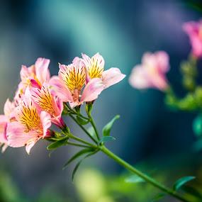 Flower in the sun by Ivica Bajčić - Flowers Single Flower ( nature, park, blue, single flower, green, nature up close, photography, sun, flower )