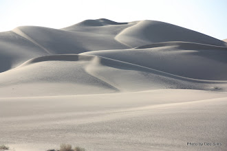 Photo: (Year 3) Day 37 - Sand Dunes at Glamis #3