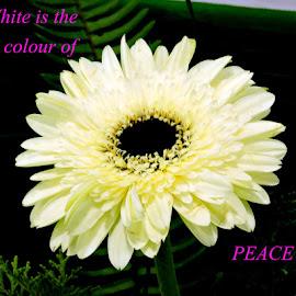 PEACE by SANGEETA MENA  - Typography Quotes & Sentences