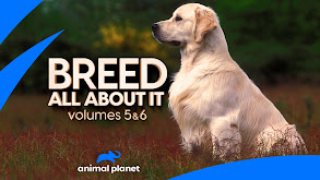 Shetland Sheepdog thumbnail