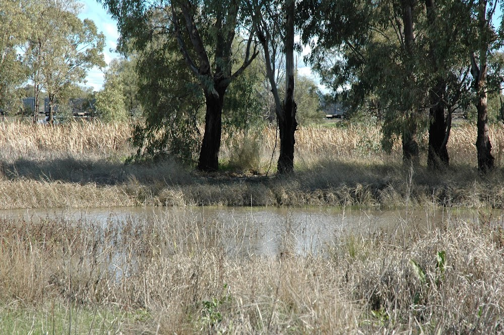 The state of the Wukawa Street entry to the West lake, largely blocked up by cumbungi (bullrush) and other weeds is a concern for Narrabri Shire councillors.