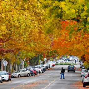 Canopy of color by Kati Garner - Landscapes Weather ( orange, red, fall, street, trees, pwcautumn, yellow )