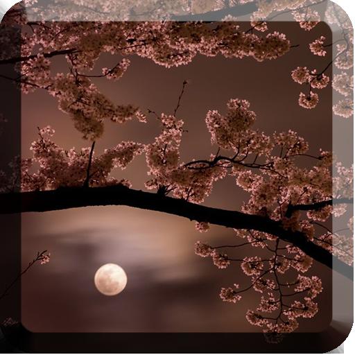樱花动态壁纸 個人化 App LOGO-硬是要APP