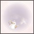 白磁の茶器