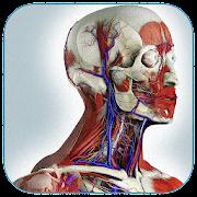 Нормальная анатомия человека