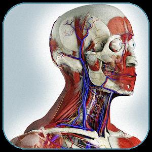 анатомия картинки человека