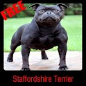 Staffordshire Terrier icon