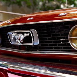 The Legend  by Anto Boyadjian - Transportation Automobiles ( car, mustang, beautiful, ford )