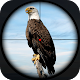 Download Bird Hunter Sniper: Duck Shooting 3D For PC Windows and Mac