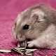 Funny Hamsters Cute New Jigsaw Puzzles for PC-Windows 7,8,10 and Mac