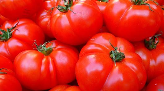 La producción de tomate en la UE desciende este año