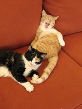 Photo: Couch potato kitties.