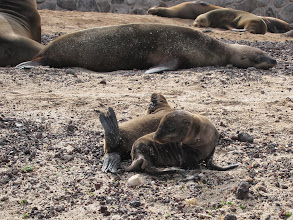 Photo: Sea lion pups