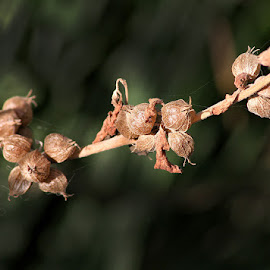by Abdul Rehman - Nature Up Close Other plants