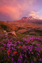Photo: Edge of the Storm  On Sunday night my wife and I decided to head to Mt St Helen's for a little picnic. This was supposed to be half 'me scouting for flower conditions' and half 'us having fun together'. The forecast called for no clouds and I didn't really expect any flowers, but since my wife and I had never been to Mt St Helens we went just to have a nice night and enjoy the outdoors a bit. Well after we set up our little picnic I start to notice a freak thunderstorm forming just past Mt St Helens. We sat here and watched the lightening and the CRAZY light for about 45 minutes. The edge of the storm passed by Mt St Helens right at sunset, and I was able to capture this shot.  Guess it was my lucky day!  #plusphotoextract