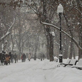 Moscow snowfall by Владимир Агруц - City,  Street & Park  Street Scenes ( snowfall, winter, snow, moscow )