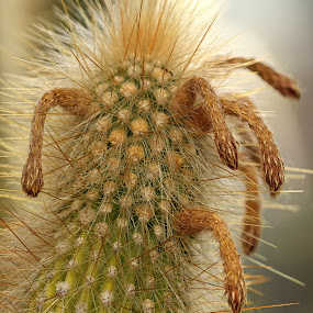 by Dragos Tranca - Nature Up Close Other plants