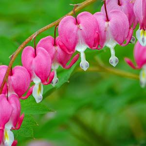 FlowerG.jpg