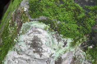 Photo: Year 2 Day 44 -  Moss and Lichen on the Stones