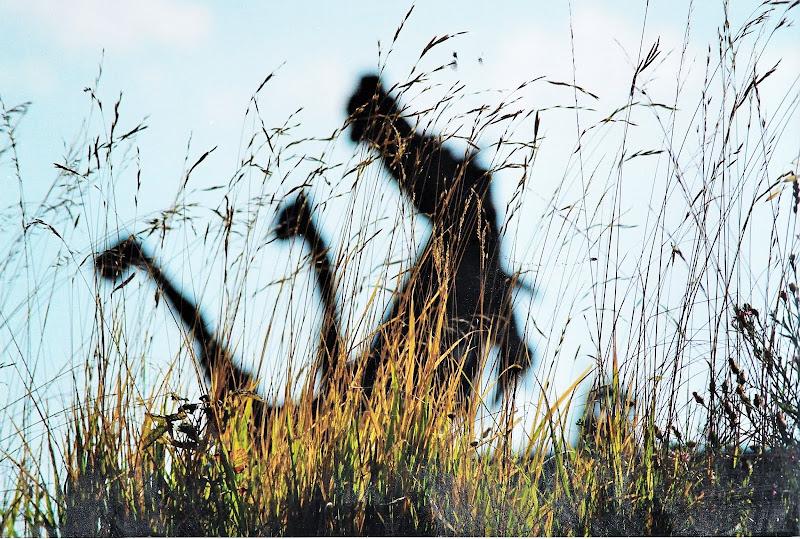 Horse. di enricomariaguidi