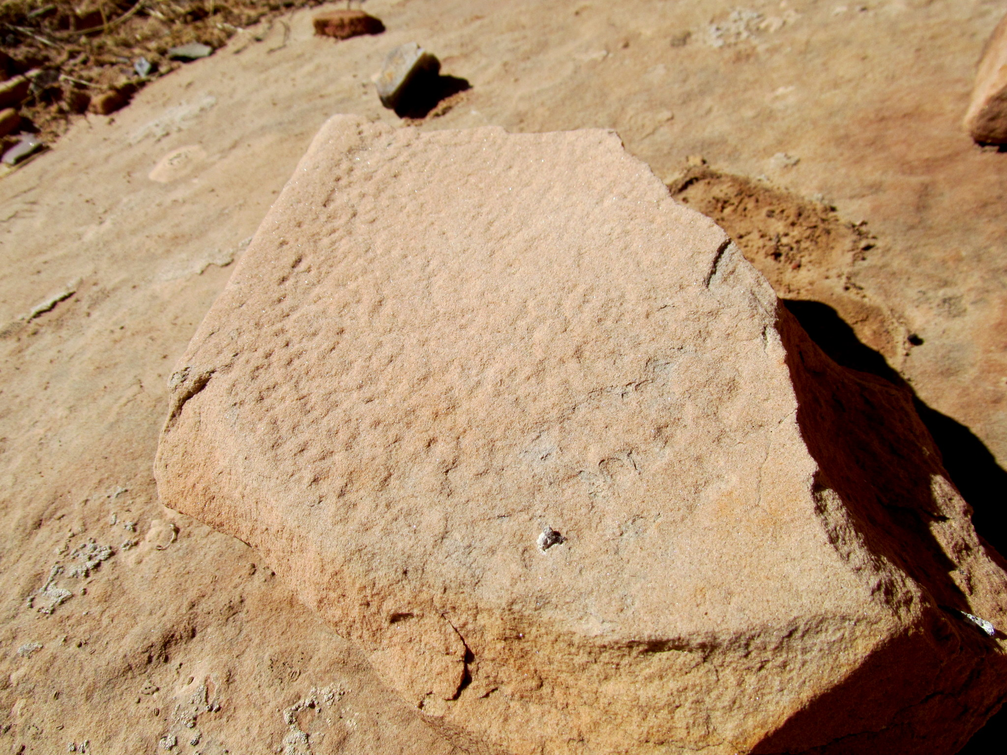 Photo: Broken, pecked metate