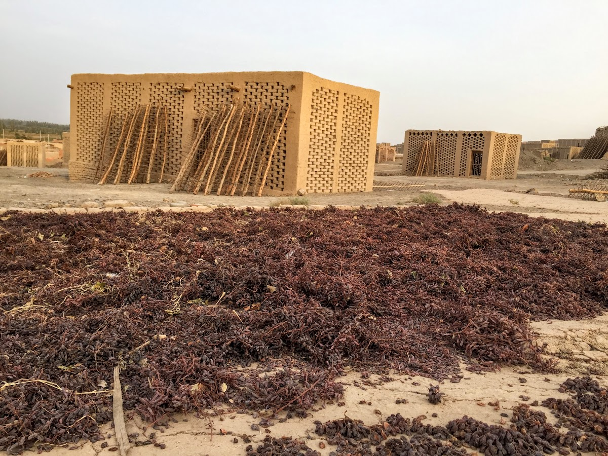 China. Xinjiang Turpan . Traditional Chunce with Raisins Drying on the Ground