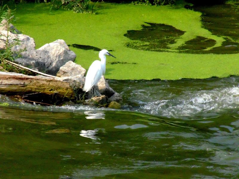 A pesca di joysphoto