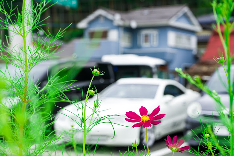 SL R230の福岡,五ケ山ダム,小川内の杉,車以外の🐢活,嫁は二日酔い🤮に関するカスタム&メンテナンスの投稿画像7枚目
