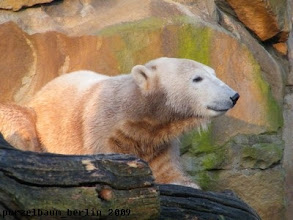 Photo: Knut geniesst die Sonne :-)