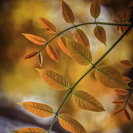 newly born baby leaf by Anisur Anis - Nature Up Close Other Natural Objects ( beatiful, colourful, nature, leaf, newborn )