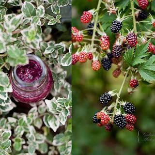 Soymilk Blackberry Smoothie Recipes