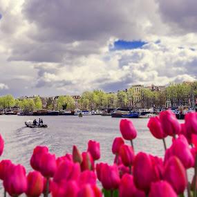Amsterdam, Holland by Inna Fangel - City,  Street & Park  City Parks ( water, sky, holland, amsterdam, travel, tulips, city )