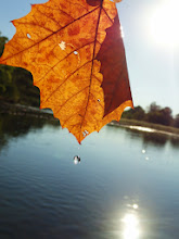 Photo: Water drop falling from an orange leaf into a river at Eastwood Park in Dayton, Ohio.